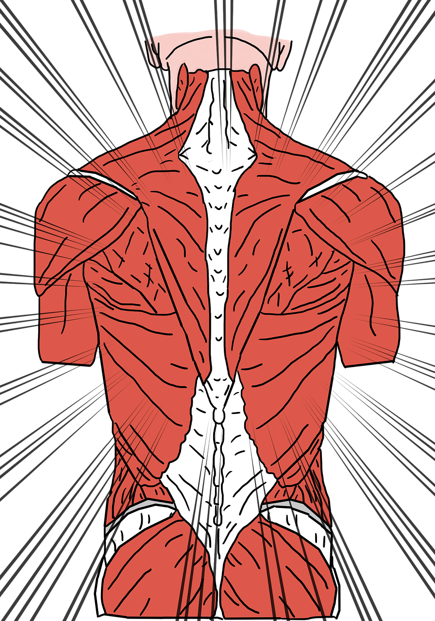 Fysiotherapie & Lymfdrainage Het Nieuwe Plan fysio