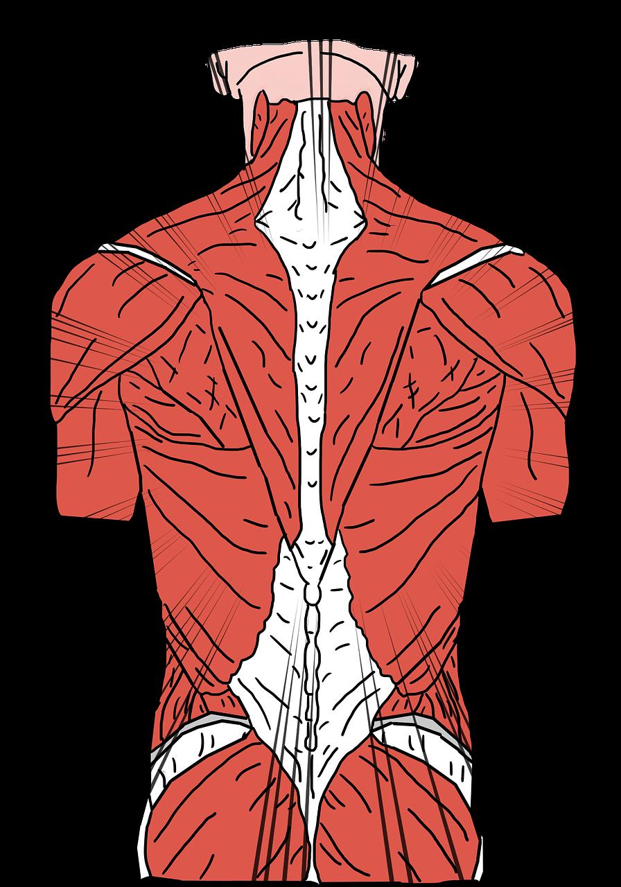 Fysiotherapie Ouddorp massage fysio