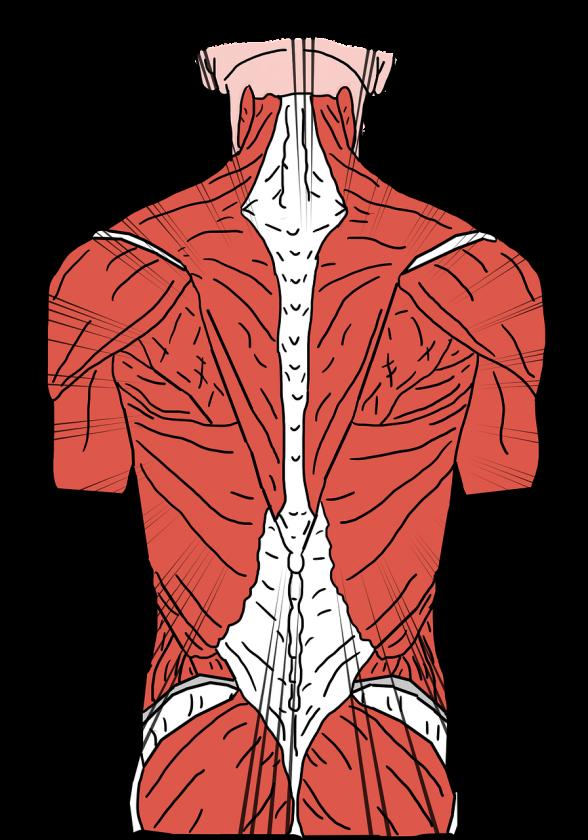 R. Pons, MSc Manueel Therapeut sport fysio
