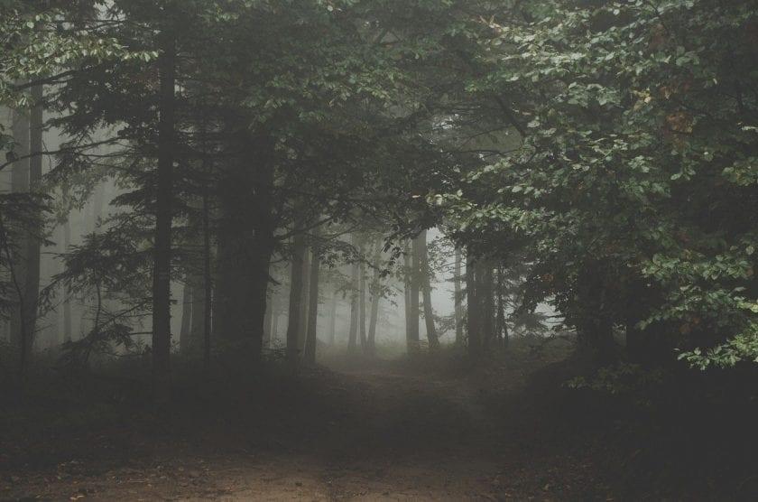 Bachbloesem Aroma Therapie Aponi Ervaren Praktijk Alternatieve Geneeswijze