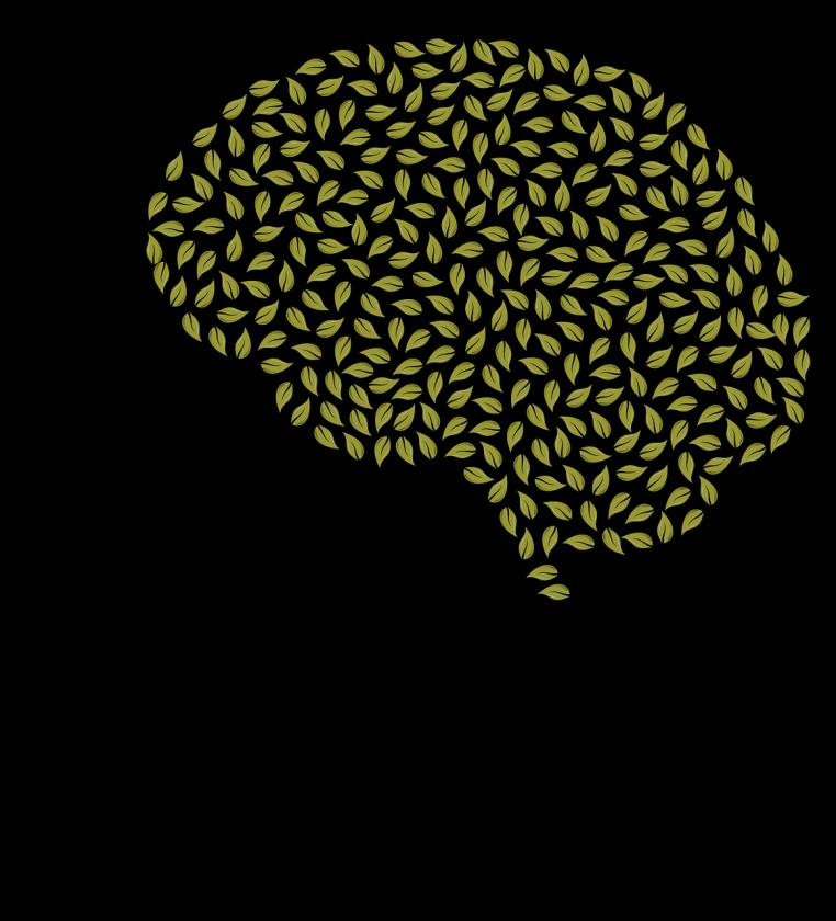 Brainconstructions BV praktische ggz