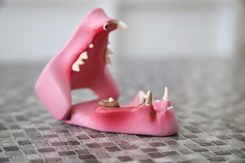 Centrum voor Tandheelkunde Gorinchem bang voor tandarts