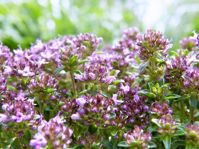Cosmic & Flower Therapie beoordelingen Alternatieve Geneeswijze
