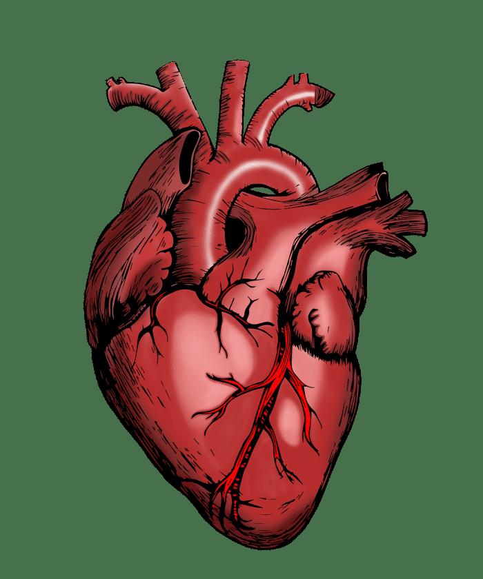 Dermicis Koog aan de Zaan ziekenhuis kliniek review