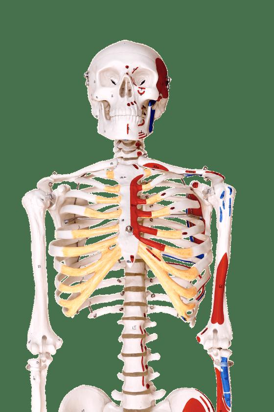 Ergotherapie Gabriëlle Hageraats ergotherapeut beoordeling