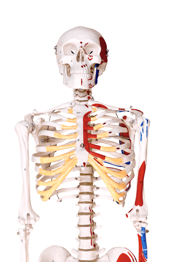 Ergotherapiepraktijk Ago ervaringen ergotherapie