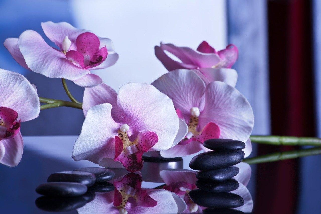 Fysiotherapie De Enk massage fysio