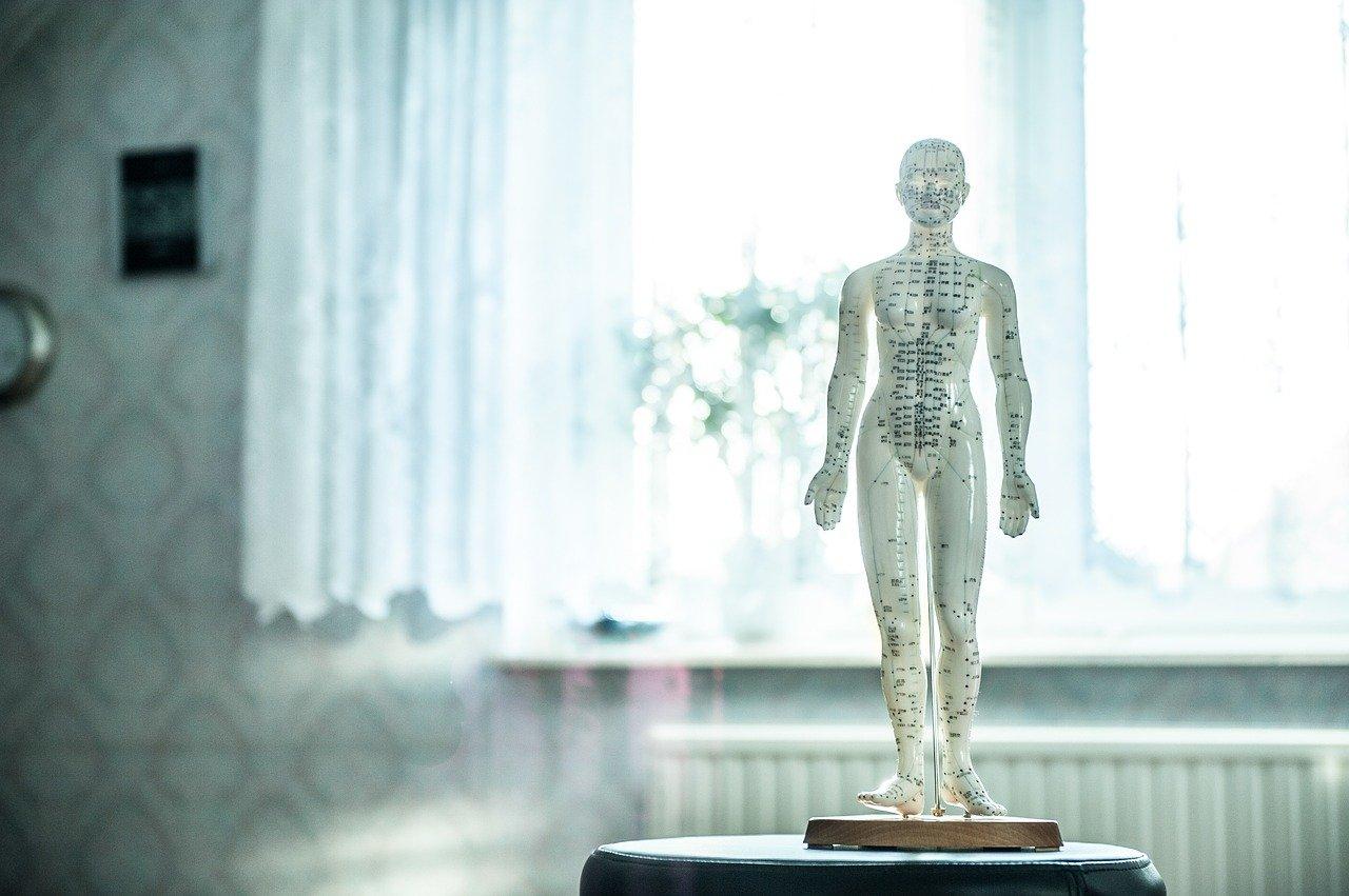 Fysiotherapie en Acupunctuur Schoorl, Nina Spijker fysiotherapie spieren