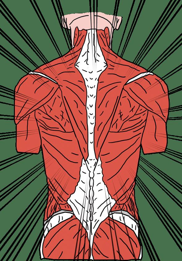 Fysiotherapie en Revalidatie PMC in Balans Koudekerke fysiotherapie spieren
