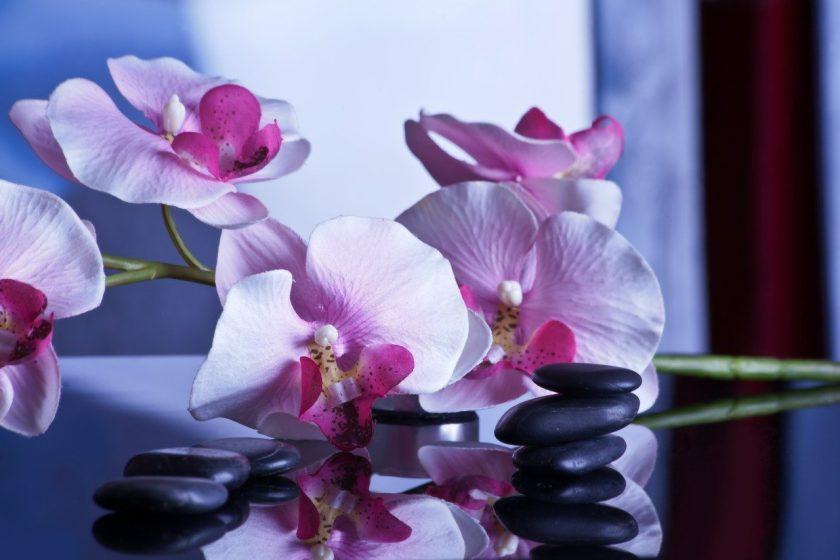 Fysiotherapie Zandvoorterweg B Hos massage fysio