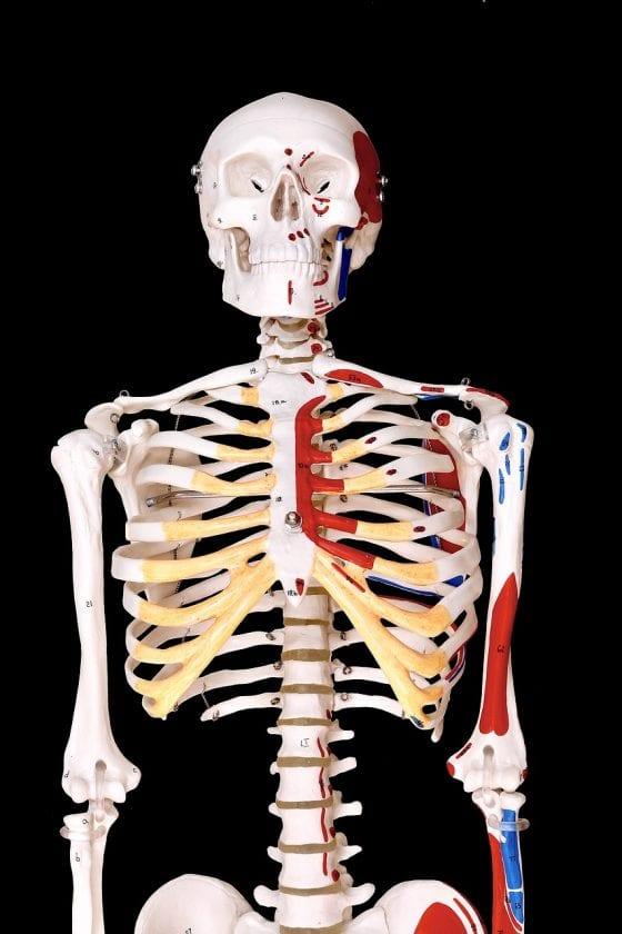 Kempen Ergotherapiepraktijk Fysio Polfermolen S kosten ergotherapie