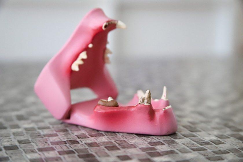 Niemantsverdriet Tandartspraktijk bang voor tandarts