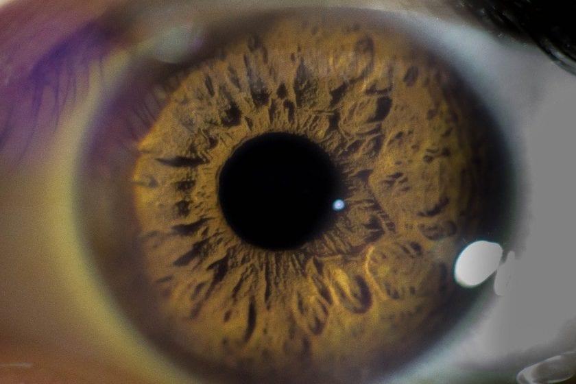Pieter Wiercx Optiek opticien