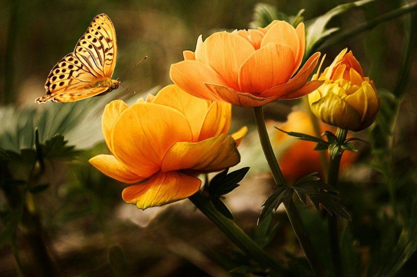 Pranamarina Natuurgeneeskundig Therapeut beoordelingen Alternatieve Geneeswijze