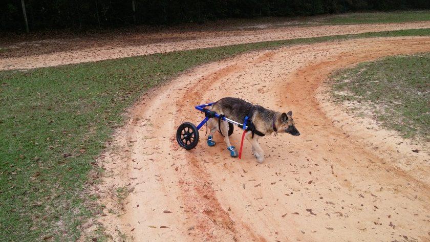 Rutger Wieske instellingen gehandicaptenzorg verstandelijk gehandicapten