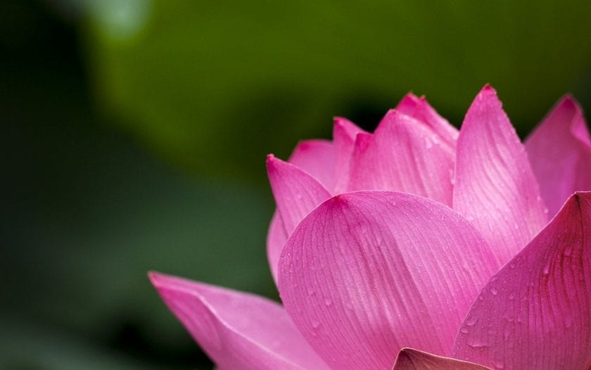 Serenity Healing kosten Alternatieve geneeswijzen