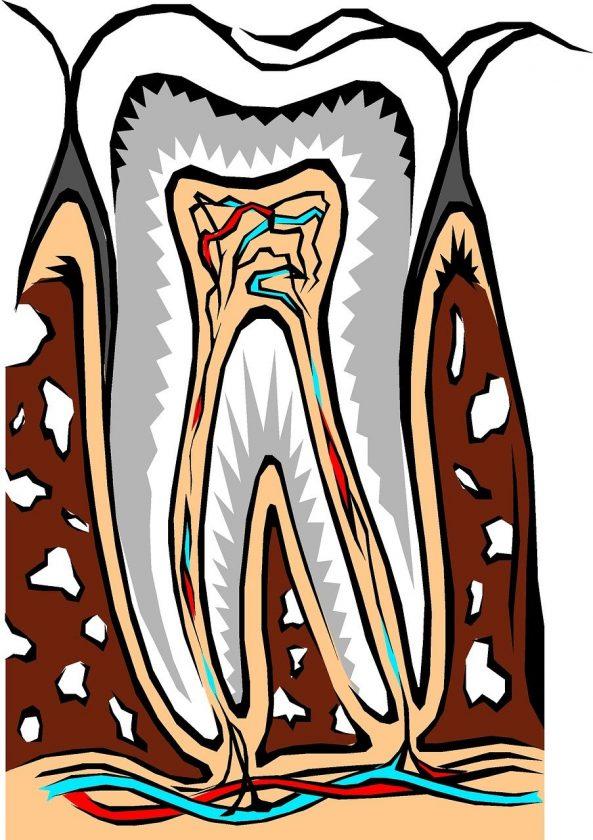 Siertsema-Baron A E bang voor tandarts