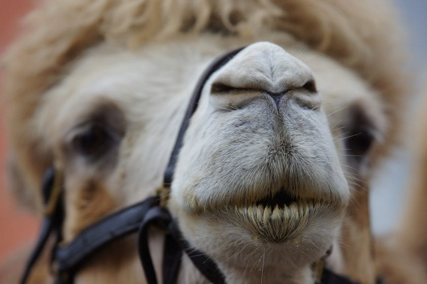 Tandarts praktijk Limburg spoedhulp door narcosetandarts en tandartsen