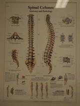 Fysiotherapie Mariaparochie - Harbrinkhoek sport fysio